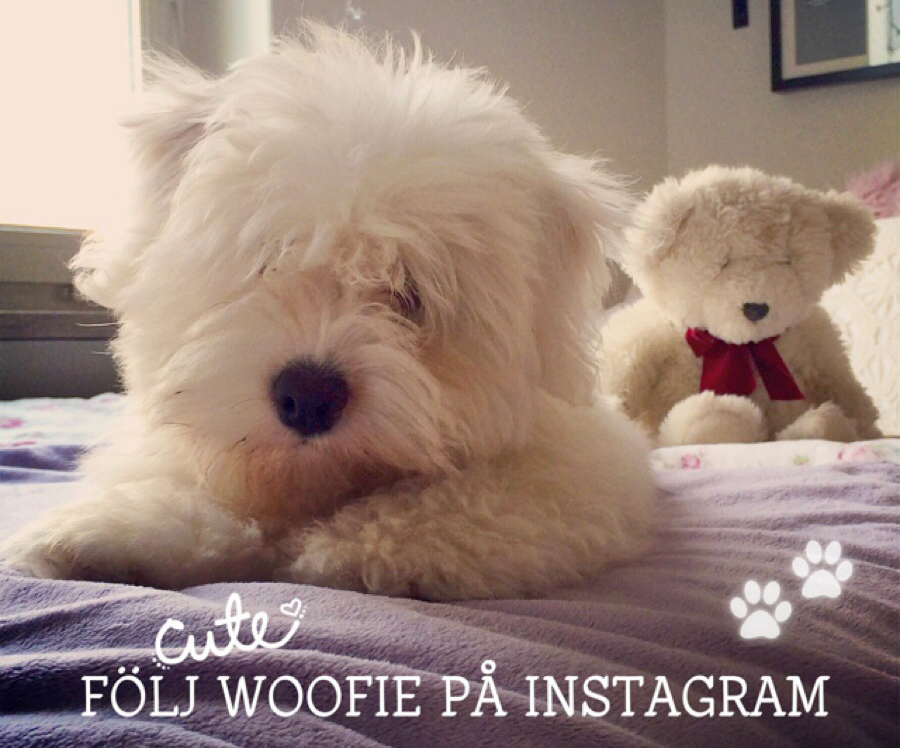 follow-woofie-at-instagram